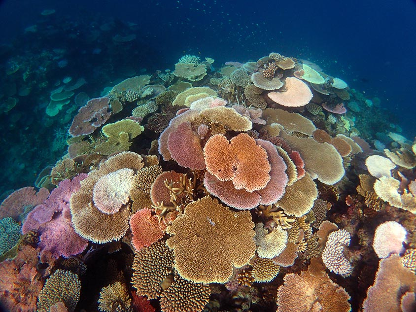 A heat stressed reef showing signs of bleaching