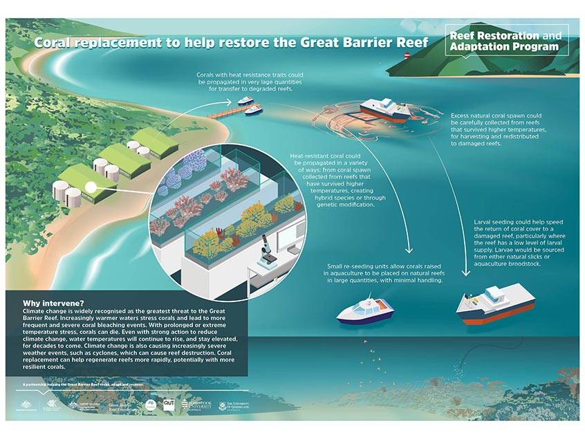Coral replacement to help restore the Great Barrier Reef infographic